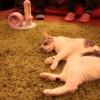 【ネコニュース】猫はかわいいのです【2014年3月4日】