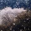 【ガーマンソンの詩】無茶ブリ3行リレー劇場 最終話