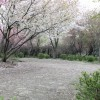 03月29日活動記録!+α(お花見)