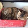 【猫】日を追うごとに豪華になっていくメイの生活…。