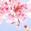 第176話『桜園の誓い』花見&三国殺GP4の巻
