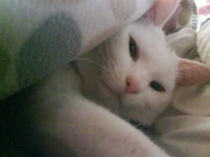 ④腕枕で添い寝