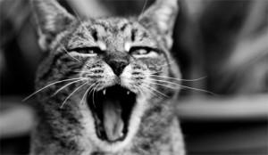 4lazy-cat