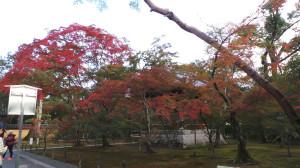 kyoto_012