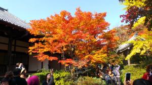 kyoto_025