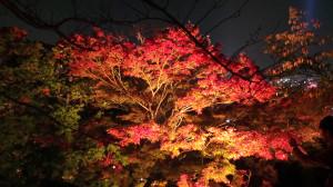 kyoto_035