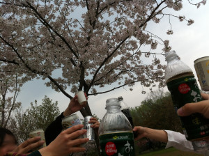 正に桜園決議ですっ!
