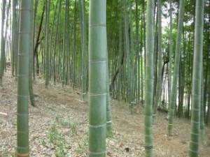 karasuyama1