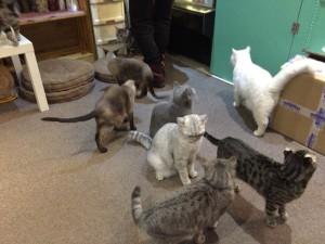 そのうちなんだかネコが集会をしだします。でも何故か皆同じ方向を見ていますね。そう、ご飯の時間だったようです。