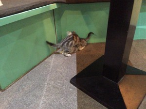 ふと机の下を見ると、子猫たちがじゃれていたり。